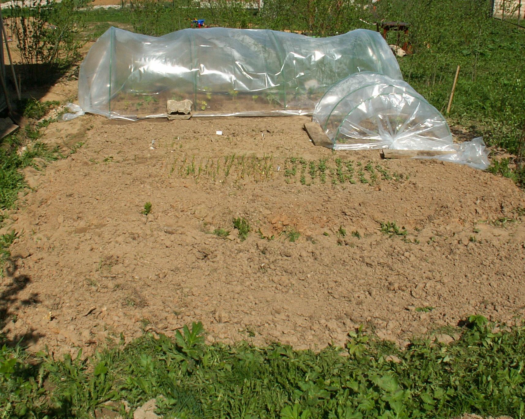 Как мы сажали огород