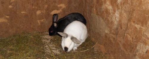 Новые жильцы кроличьей норы