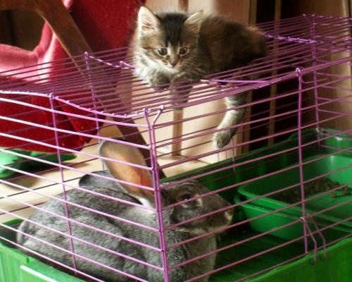 Кролик и котёнок