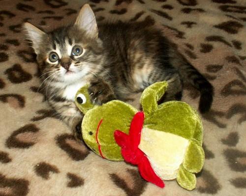 Котёнок и лягушка