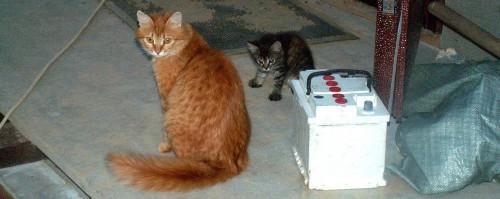 Кошка загоняет котёнка в дом