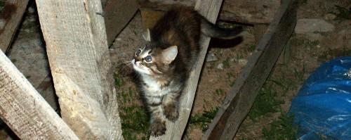 Котёнок на досках
